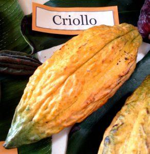 Criollo beans