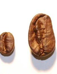 Кофе свежеобжаренный Марагоджип 100% арабика Panama