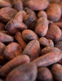 Какао бобы сорт Trinitario