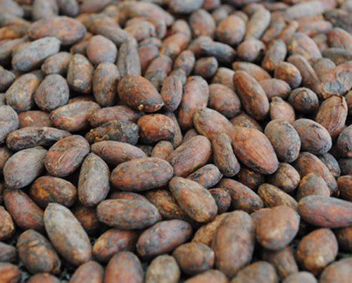 Cocoa-Beans-Criollo
