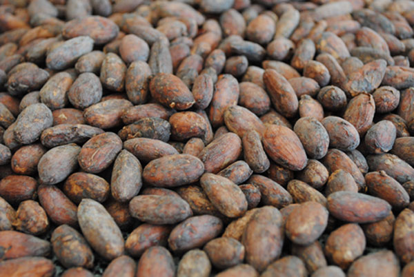 https://cocoa.com.ua/wp-content/uploads/2017/12/Cocoa-Beans-Trinitario-1.jpg