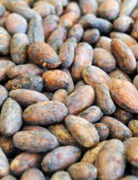 Какао бобы сырые сорт Trinitario