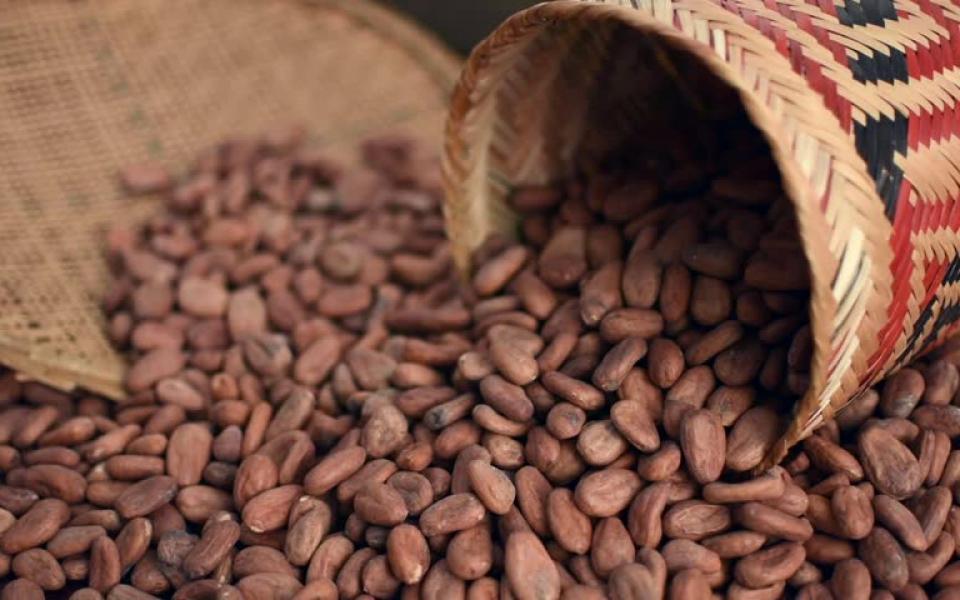 Продажа натурального шоколада и кофе