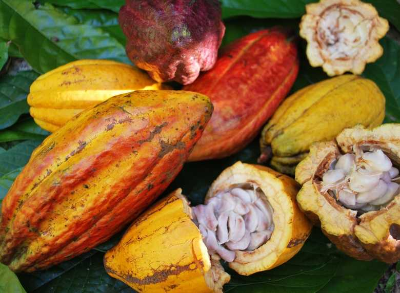 Brazil cocoa beans