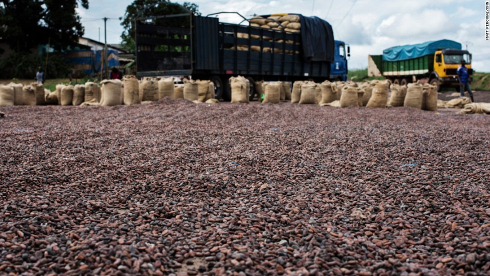 Drying and Storage cocoa beans