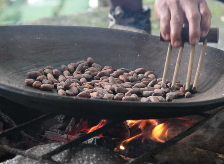 Ecuador cocoa beans