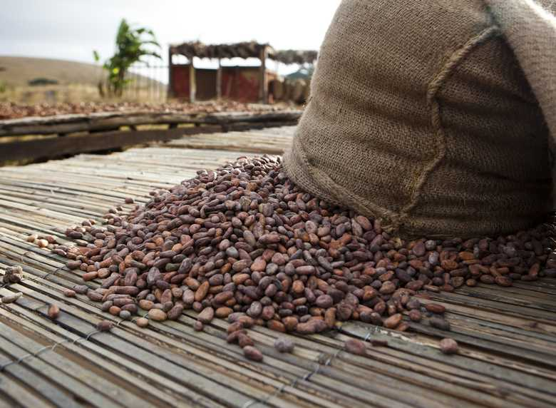 Nigeria cocoa beans