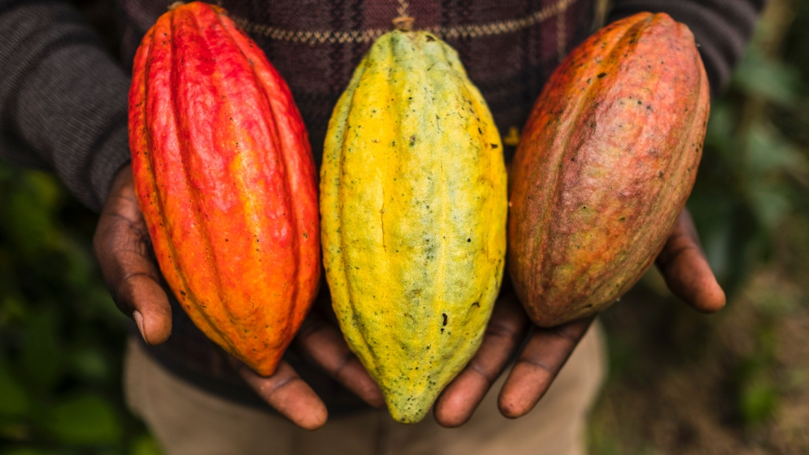 Top 10 countries of cocoa beans producers