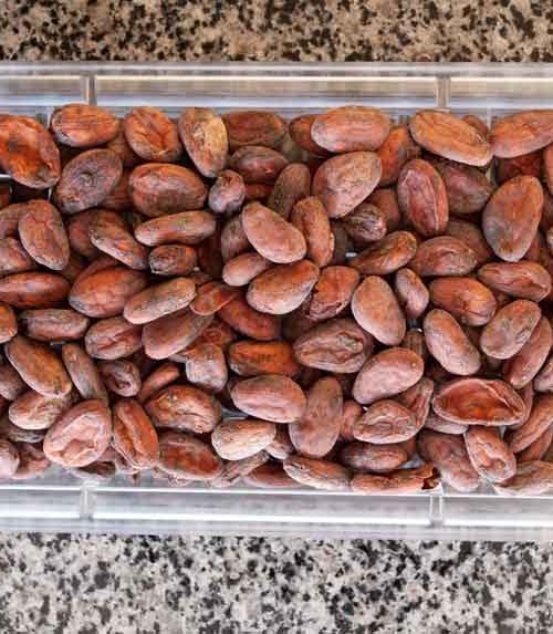 Какао бобы сорт Криолло