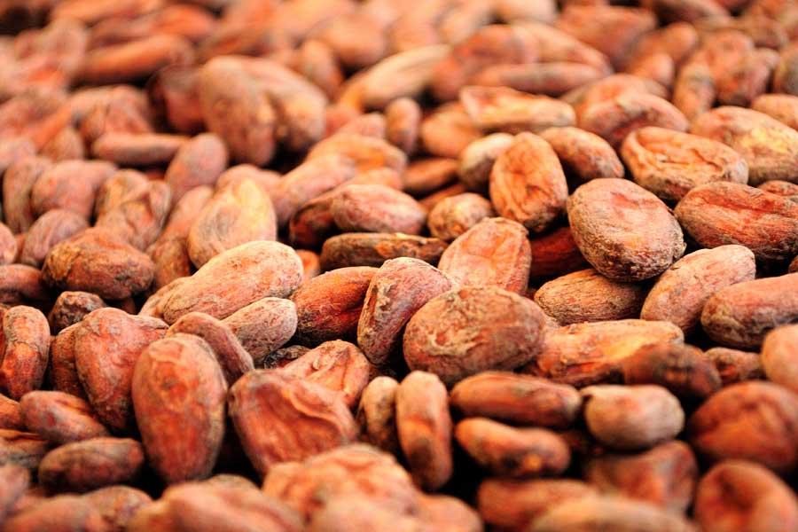 Какао бобы сорт Криолло, Перу