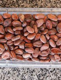 Какао бобы Криолло Перу
