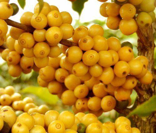 Кофе  Желтый Бурбон, 100% арабика, спешиалти