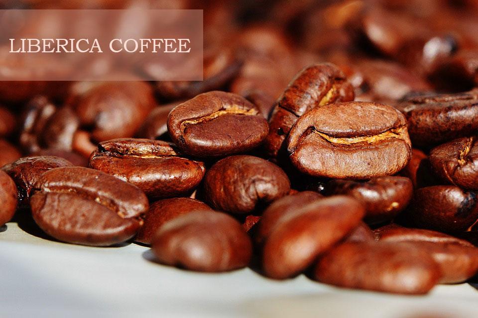Кофе сорт Либерика